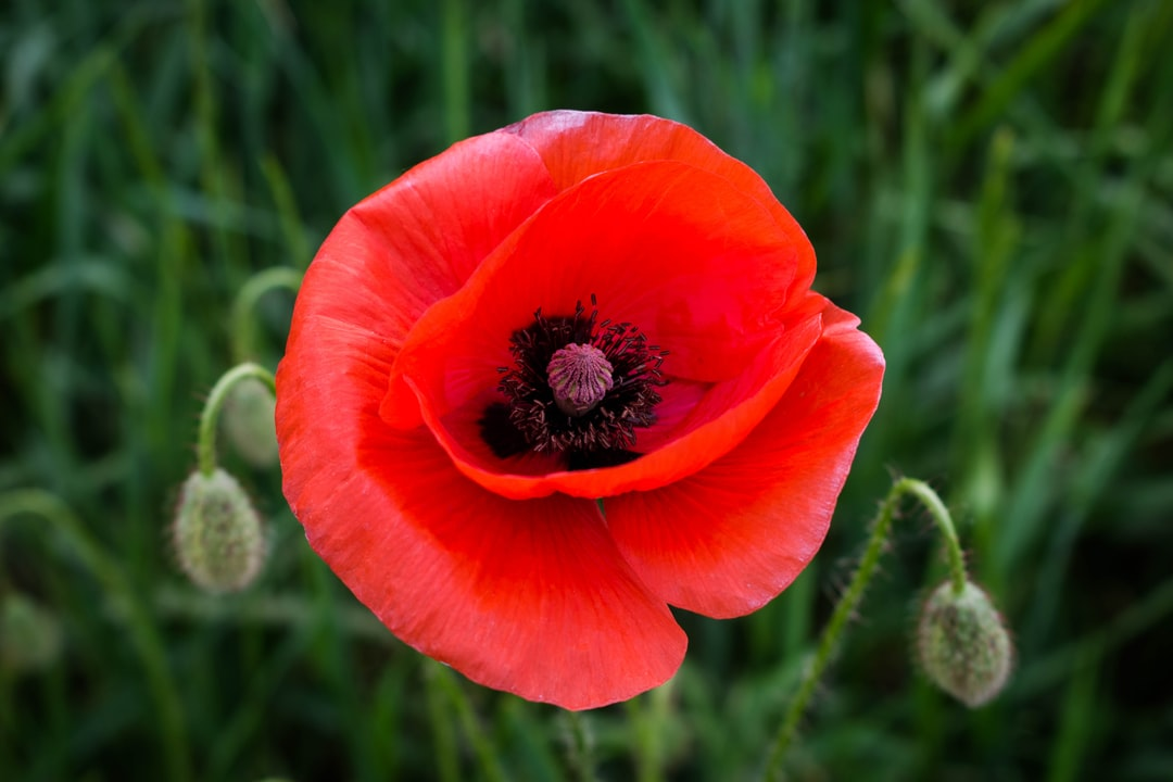 McKeen Metro Glebe Remembrance Day Hours